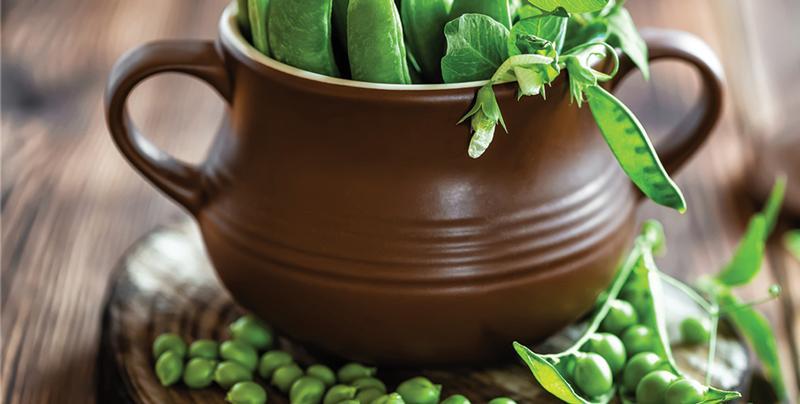 Alimentația pe bază de plante